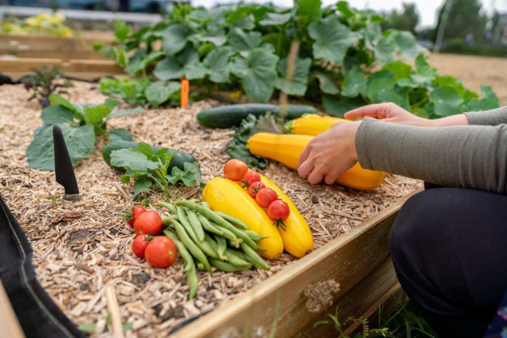 Légumes Skyfarms